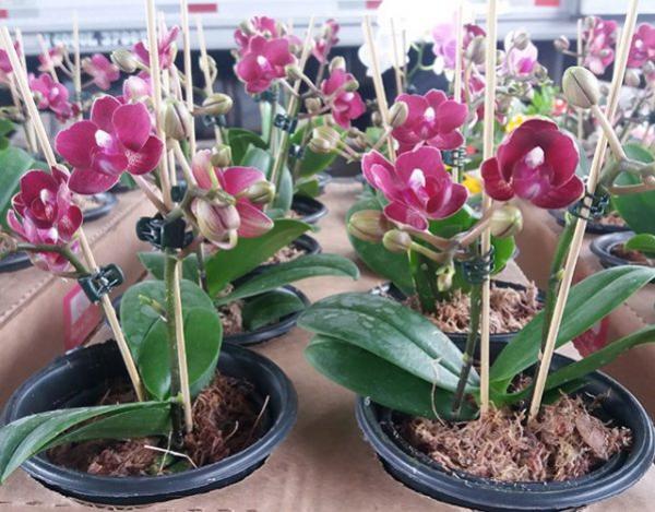 Exposição de Flores na Expo-Goio vai mostrar as novidades e toda a beleza de vários tipos de flores existente