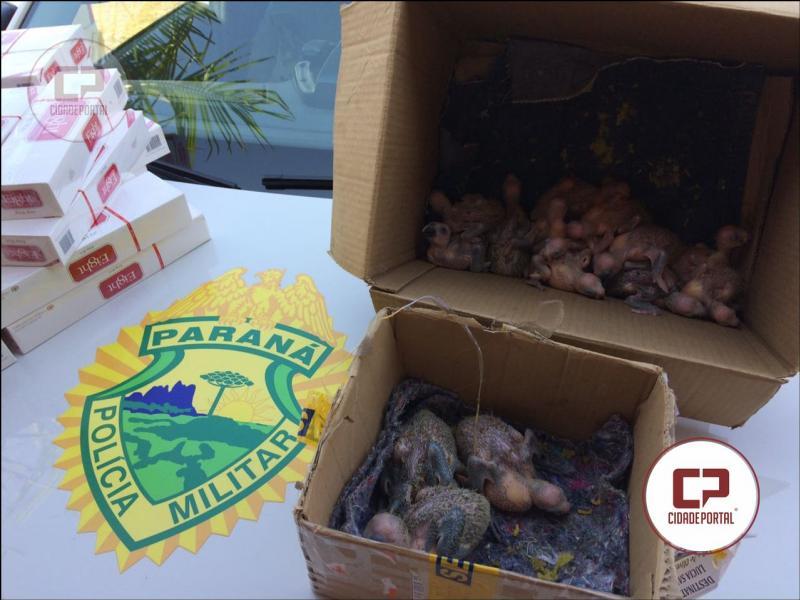Polícia Ambiental apreende aves silvestres e produtos de contrabando na cidade de Goioerê