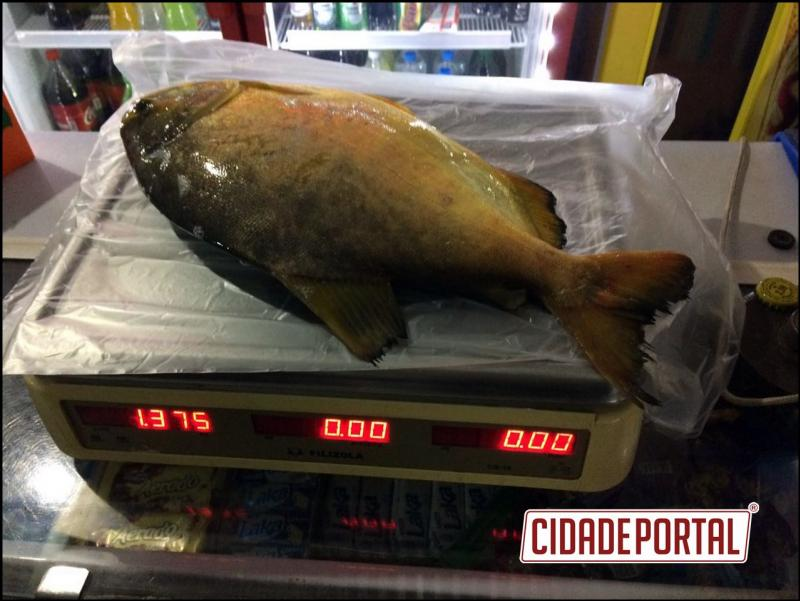 Polícia Ambiental de Umuarama prende uma pessoa em flagrante por pesca irregular