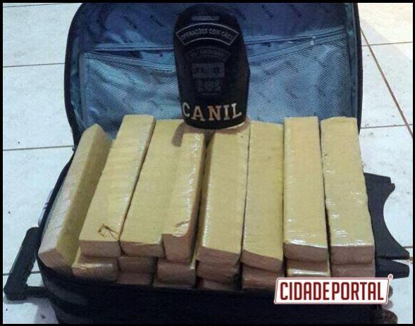 Equipes da Polícia Militar de Umuarama do CANIL e GDE apreendem aproximadamente 43 kg de maconha