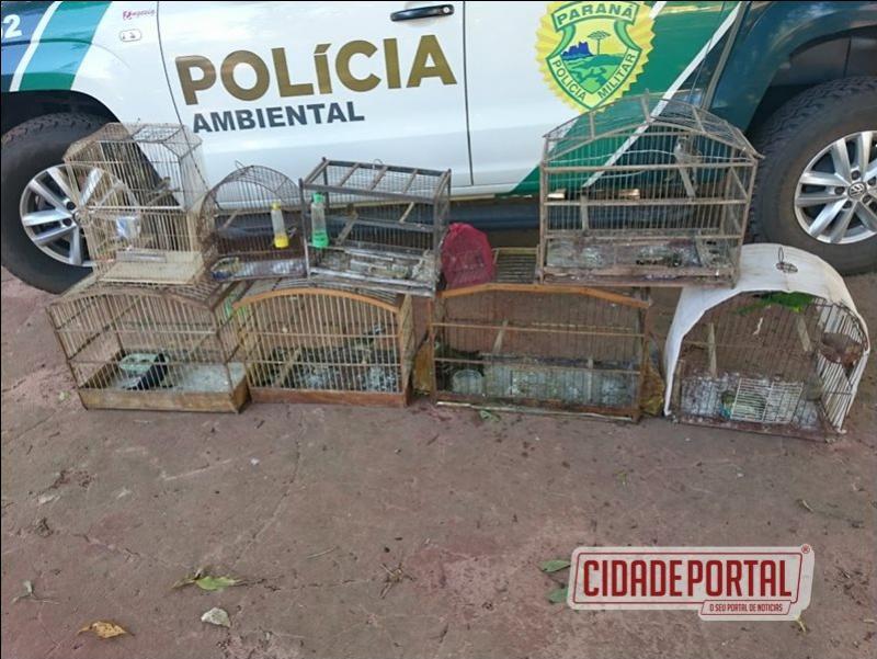 Polícia Ambiental apreende aves silvestres em Cativeiro na área rural de Altônia