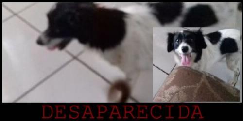Joelma de Ubiratã esta a procura da sua cachorrinha MEX que esta desaparecida desde terça-feira, 13