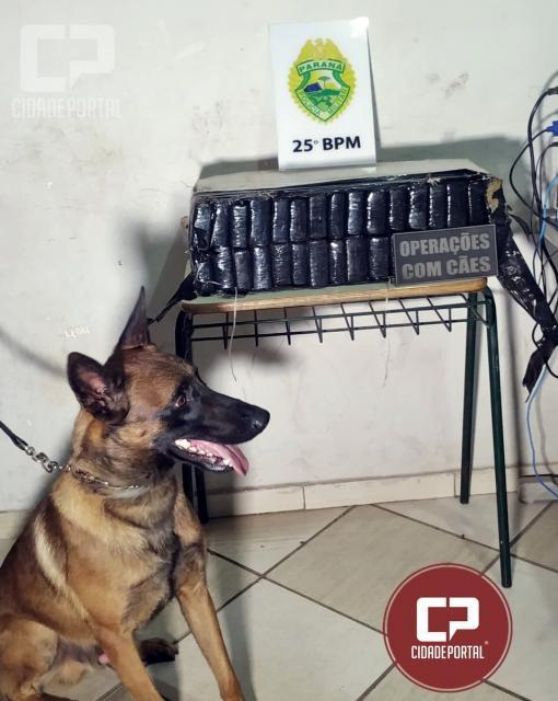 Polícia Militar de Umuarama apreendem 28 KG de maconha após buscas em mata