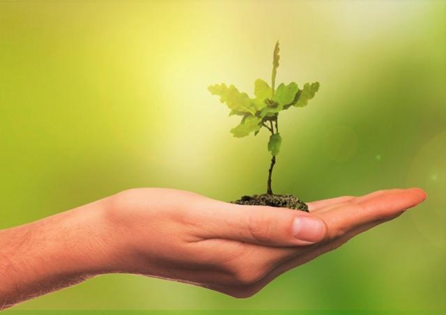 População pode sugerir ações para a Semana do Meio Ambiente