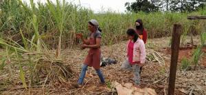 Projeto Renda Agricultor beneficia famílias em situação de vulnerabilidade no município de Roncador