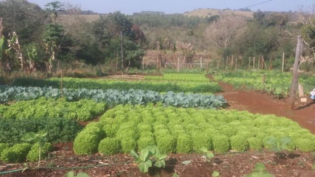 Agricultora de Barbosa Ferraz recebe certificação orgânica