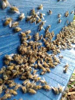 Barbosa Ferraz realiza curso de manejo avançado para a apicultura