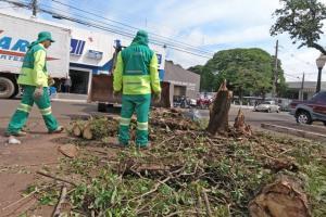 Município e Defesa Civil atuam na limpeza de árvores e galhos devido aos fortes ventos da semana