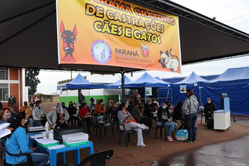 Castração de cães e gatos na SEAMA até terça-feira