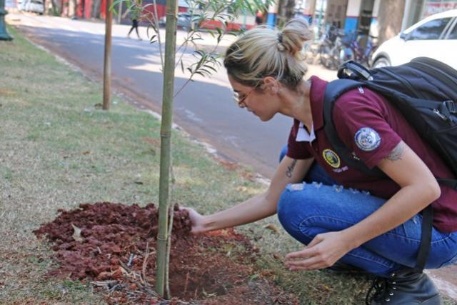 Município de Campo Mourão plantou mais de 2 mil árvores e removeu 160 em 2019
