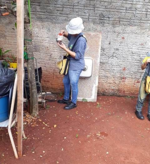Aumenta a infestação do mosquito Aedes aegypti em Campo Mourão