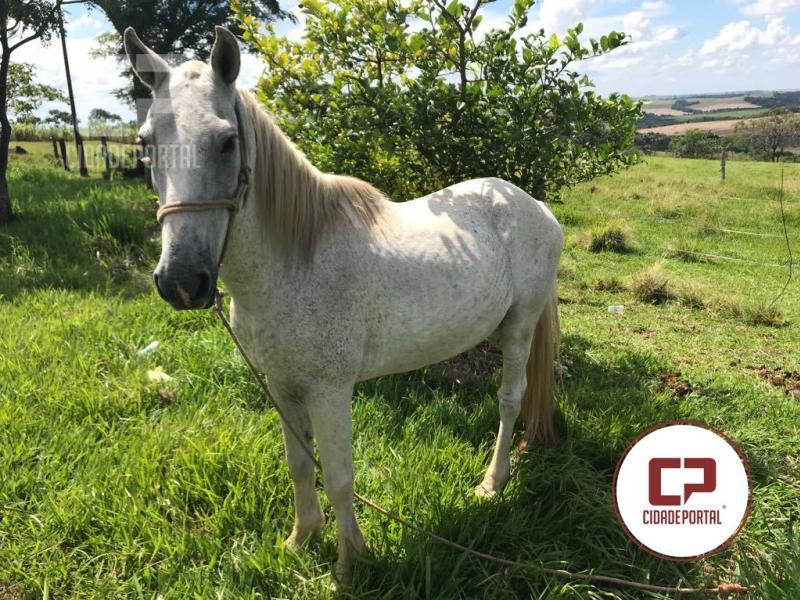 Cavalo furtado em Moreira Sales foi recuperado em Paraná do Oeste