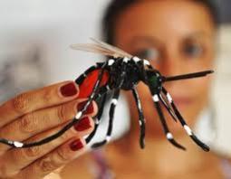 Infestação do mosquito Aedes Aegypti está em 5,2%