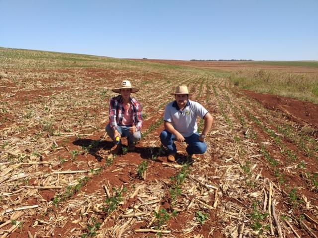 Engenheiro agrônomo do IDR-Paraná realiza monitoramento da temperatura do solo nas propriedades em Quinta do Sol