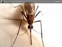 Saúde faz novo Levantamento de Índice  de infestação do mosquito Aedes Aegypti