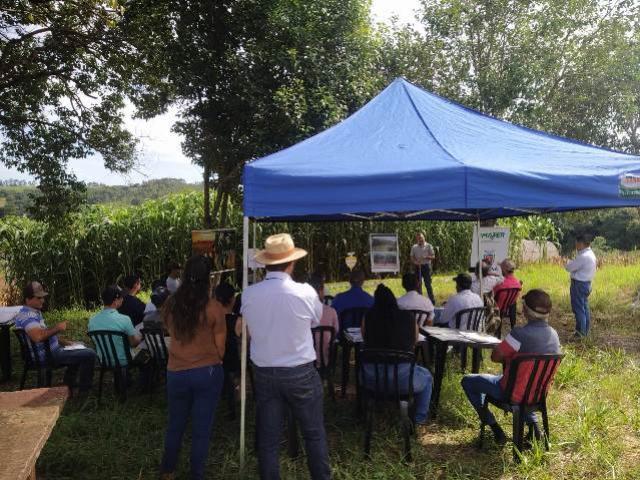 Emater de Iretama incentiva a conservação de forragem com sorgo gigante boliviano