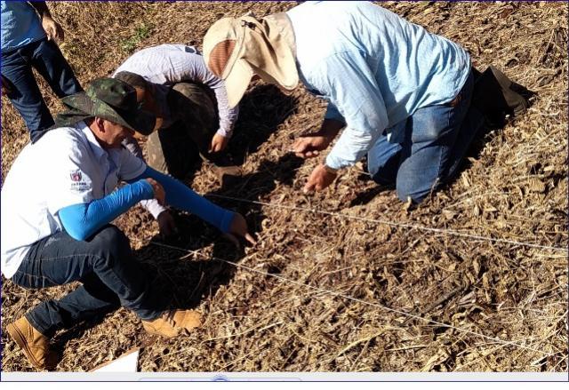 Colheita da Safra de Soja 2019/2020 está quase concluída em Peabriu
