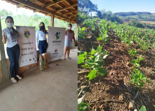 Programa de distribuição de sementes do IDR - Paraná beneficia agricultores familiares de Roncador