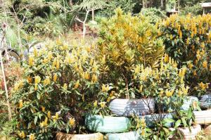 Horto Municipal atende comunidade e embeleza a cidade com plantio de flores