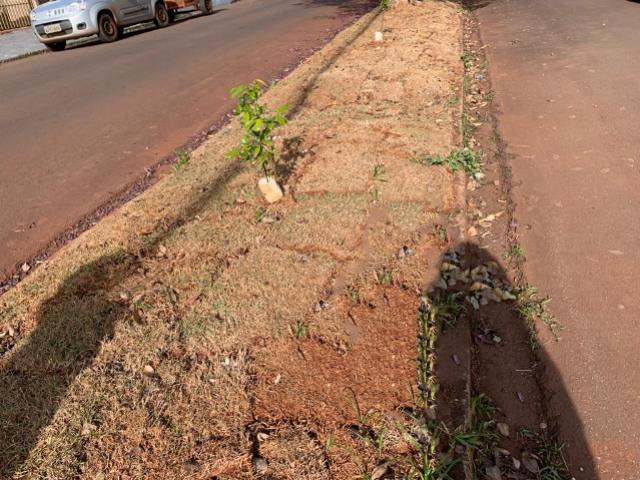 Vereadores cobram qualidade no replantio de grama em Campo Mourão
