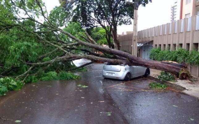Tempestade derruba árvores, causa destelhamentos e gera prejuízos em CM