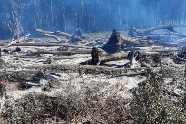 Estado aplica 4.500 multas por infrações ambientais em um ano