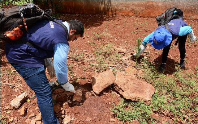 Secretaria de Saúde de Assis Chateaubriand começa o ano com arrastão para combate a escorpiões