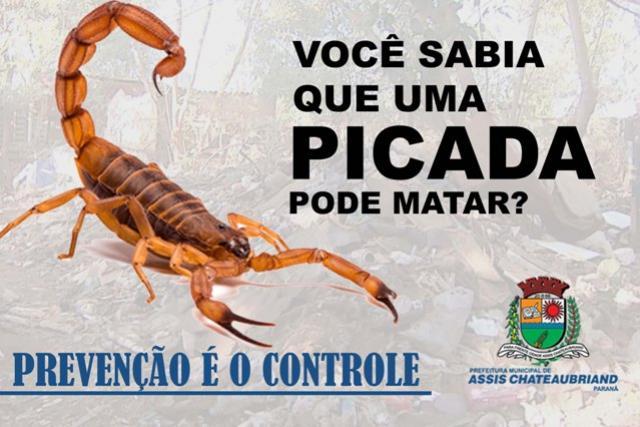 Saúde de Assis Chateaubriand orienta população sobre cuidados com os escorpiões