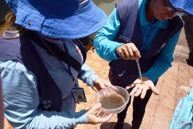 Assis reduz infestação do mosquito, mas mantém alerta contra dengue