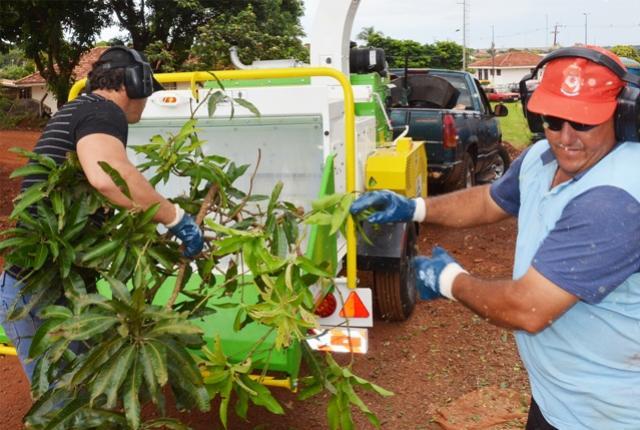 Prefeitura de Assis informa: galhos devem ser levados ao Viveiro Municipal