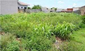 Terrenos sujos serão notificados a partir de 1º de fevereiro e multa chega a R$ 3 mil em Assis