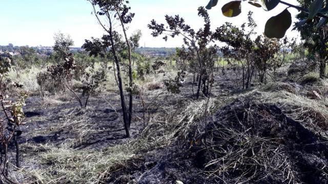 Instituto Ambiental do Paraná alerta que queimadas em terrenos baldios é Crime Ambiental