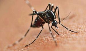 Secretaria de Saúde alerta que epidemia de dengue será decretada em Assis