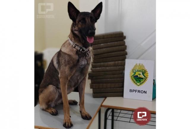 Pelotão de Operação com cães e BPFron apreendem mais de 12 kg de maconha em Assis Chateaubriand