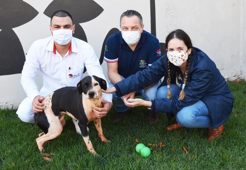 Prefeitura de Assis realiza primeiras castrações de animais de rua