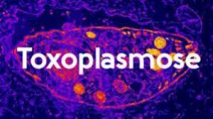 Toxoplasmose tem cura?