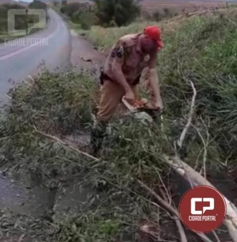 Policiais Rodoviários de Assis Chateaubriand realizam retirada de galhos da rodovia após temporal