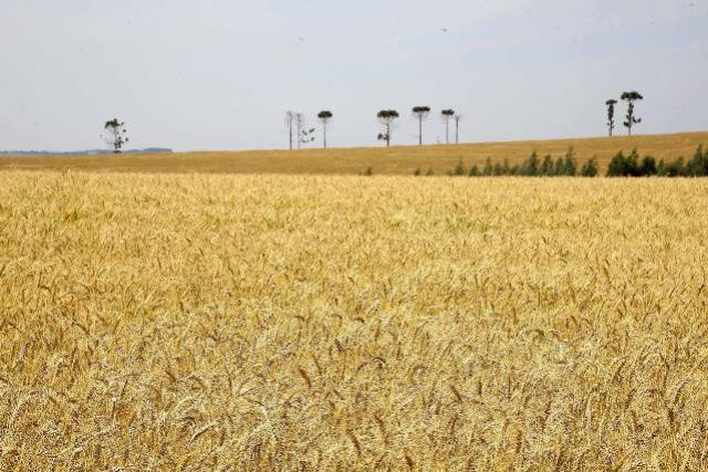 Universidade Estadual de Maringá promove 1ª Semana Internacional de Agronomia