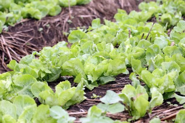 Governo libera quase R$ 500 mil em maio para 271 pequenos produtores rurais