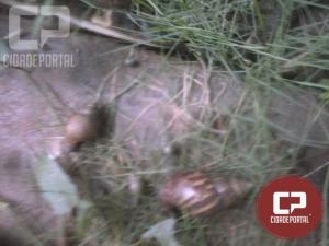 Moradores do Mutirão reclamam da sujeira em terrenos do bairro em Mariluz