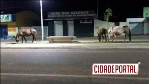 Moradores de Mariluz reclamam de cavalos soltos na Avenida Marília