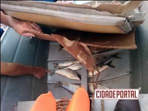Polícia Ambiental de Umuarama prende dois pescadores amadores com 8,6 KG de peixe abaixo da medida