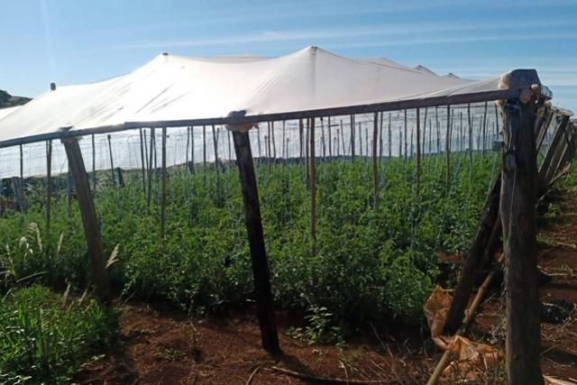 Transferência de renda melhora a produção e a vida de agricultores familiares