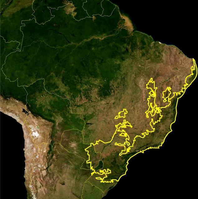 Restam apenas 12,5% de mata atlântica no Brasil