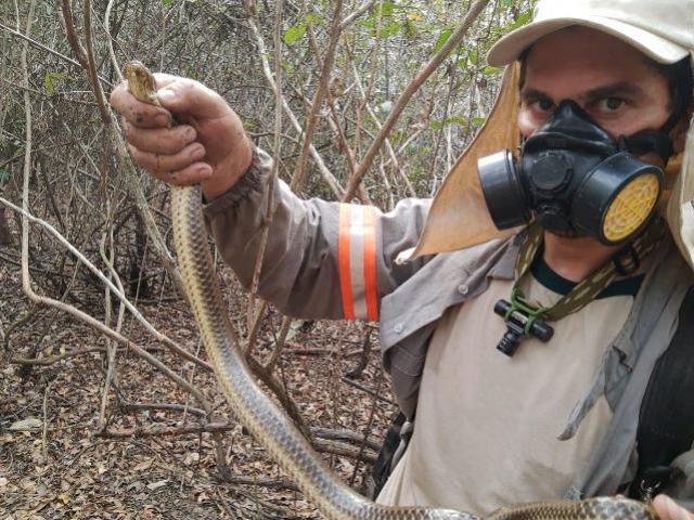 Curso vai abordar manejo de animais em situação de desastres ambientais