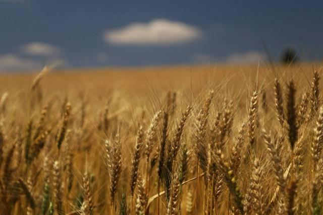 Valor Bruto da Produção Agropecuária cresce 21% em 2020 e alcança R$ 128,3 bilhões