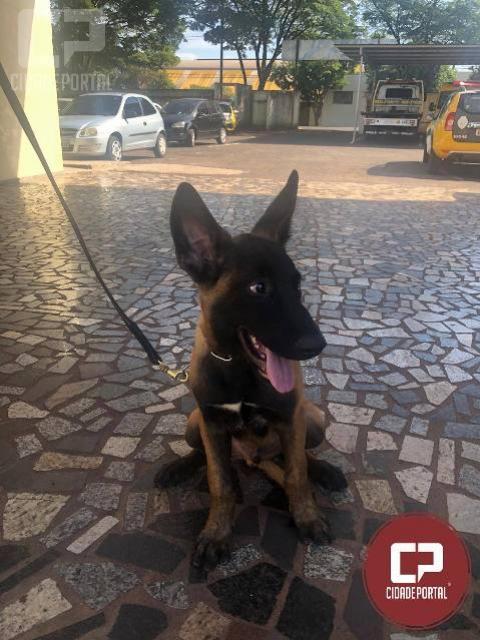 Polícia Militar de Cianorte conta com novo integrante no canil