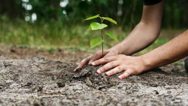 Youtubers arrecadam R$ 24 milhões para plantar árvores pelo mundo