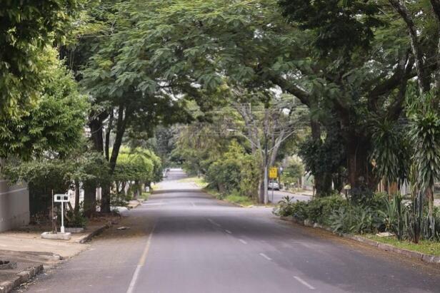 Proposta do Plano de Arborização em Umuarama está disponível para consulta online
