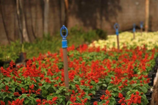 Praça Hênio Romagnolli recebe mais de 3.500 mudas de flores para o Natal